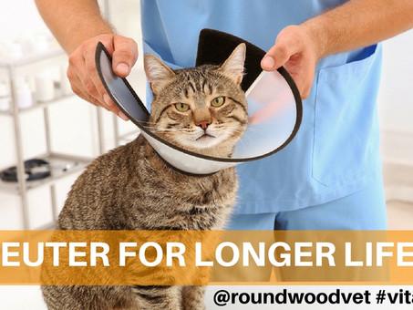 Neuter For Longer Life?