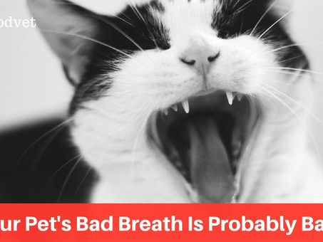 Why Your Pet's Bad Breath Is Probably Bad News