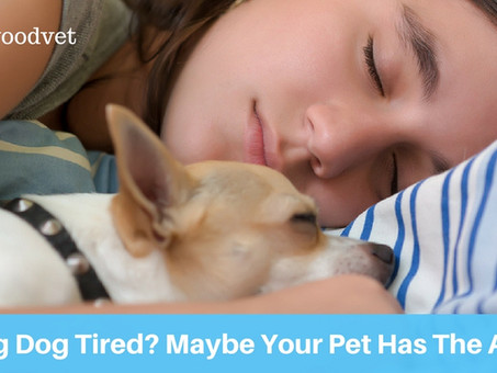 Feeling Dog Tired? Maybe Your Pet Is The Reason.
