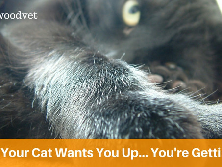 Want A Lie In But Your Pet Won't Let You? We Have A (seriously over engineered) Solution!