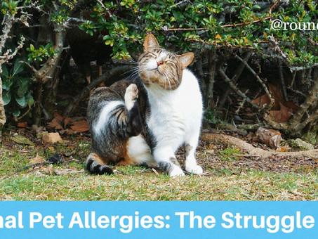 Seasonal Pet Allergies: The Struggle Is Real