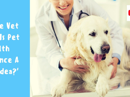 Is Pet Health Insurance A Good Idea?