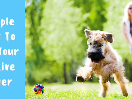 7 Simple Steps To Help Your Dog Live Longer