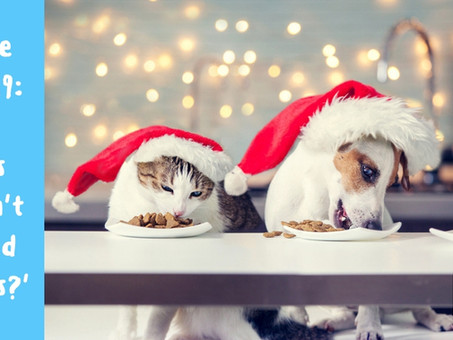 What Treats Shouldn't We Feed Our Pets?