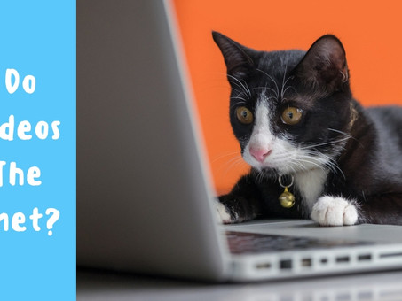 Why Do Cat Videos Top The Internet?
