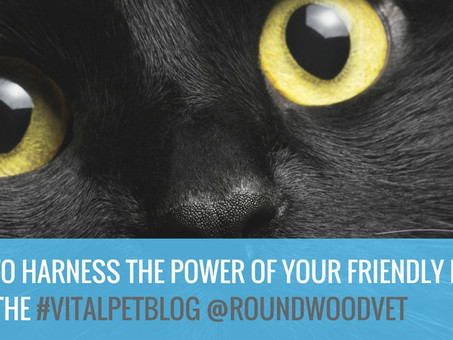 5 Ways To Harness The Power Of Your Friendly Feline