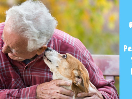 Six Reasons Why Pensioners Should Have A Pet