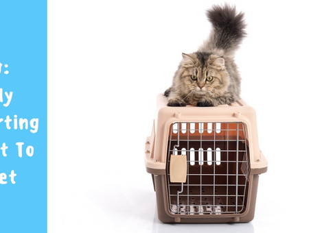 Safely Transporting Your Pet To The Vet