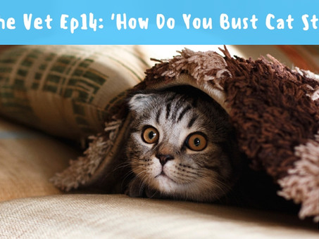 How Do You Bust Cat Stress?