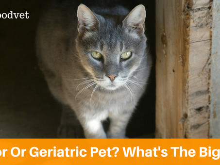 Senior Or Geriatric Pet? What's The Big Deal?