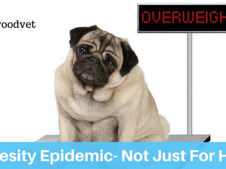 The Obesity Epidemic- Not Just For Humans