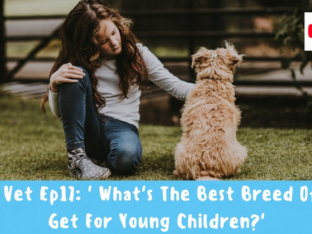 What's The Best Breed Of Dog To Get For Young Children?