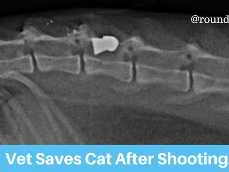 Vet Saves Cat After Shooting