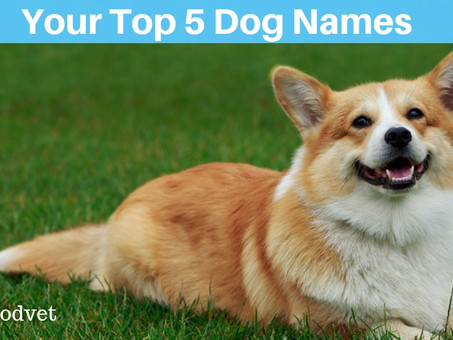 Your Top 5 Dog Names!