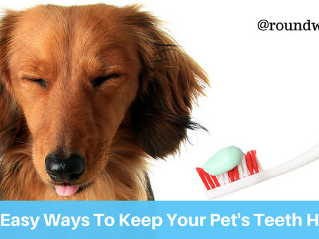 Three Easy Ways To Keep Your Pet's Teeth Healthy