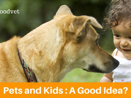 Pets And Kids: A Good Idea?