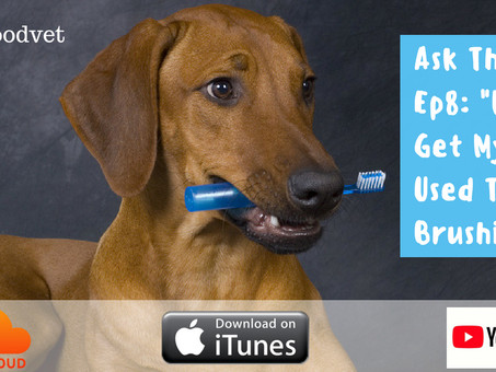 """How Do I Get My Dog Used To Toothbrushing?"""