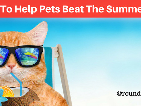 5 Tips To Help Pets Beat The Summer Heat