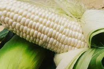 Japanese Hokkaido white corn