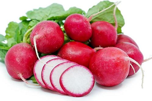 Holand Red radish