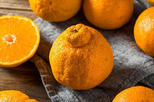 Brazilian Sumo oranges