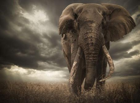 Vencedor do concurso Africa Geographic é desclassificado