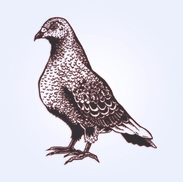 Long day #pigeon #bird #drawing #sketch