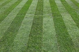 Link to Indy Lawn Maintenance Grass Program