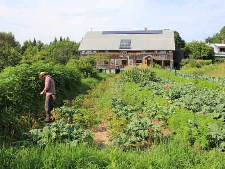 Homesteading - Grounding the Anxious Mind