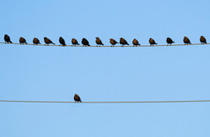 birds-on-wire-DustyPixel-.jpg