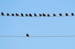 birds-on-wire-DustyPixel-.jpg