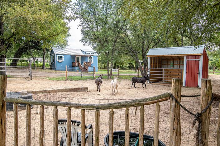 Cabin on the Ridge - Mini Donkey Pasture