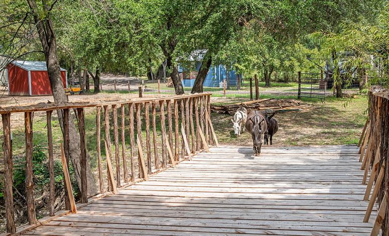 Cabin on the Ridge - Mini Donkeys cross cedar bridge