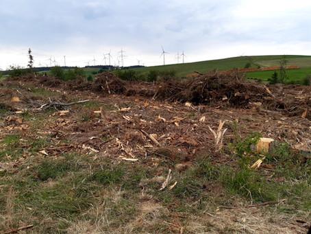 Abholzung Dehner Maarwald