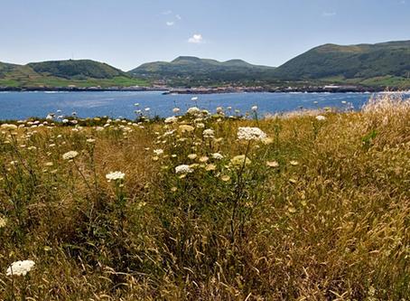 Planos de Ação das Reservas da Biosfera da Região Autónoma dos Açores | Consulta Pública