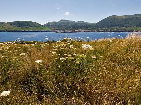 Novo projeto: Planos de Ação das Reservas da Biosfera da Região Autónoma dos Açores