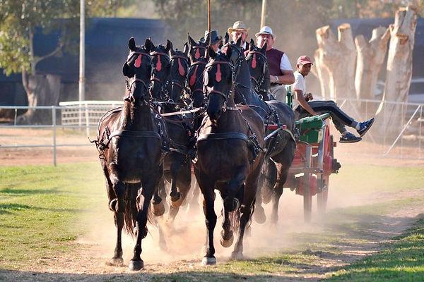 horse show pic.jpg