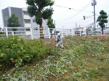 草刈①.JPG