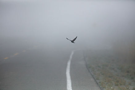 létající Bird