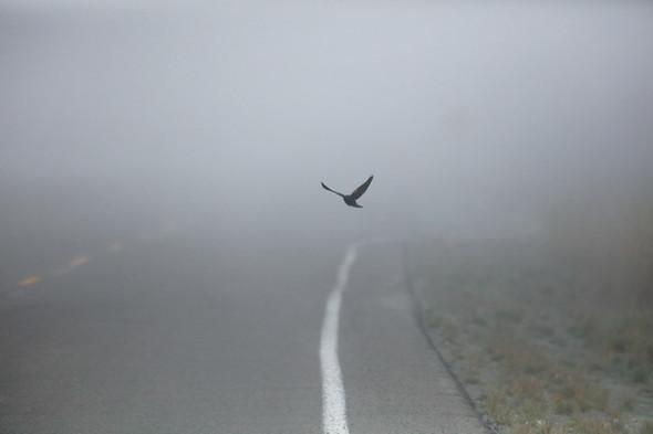 Red Kites & permission to slow down (woo-woo warning)