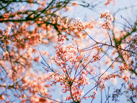 Safe & Supportive Springtime Practices for Health & Wellness