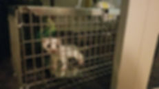 Nina Marie Lister trapped animal.jpg