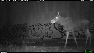 Nina Marie Lister Moose.jpeg