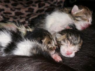 Weather Kittens