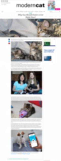 Modern Cat Article.jpg