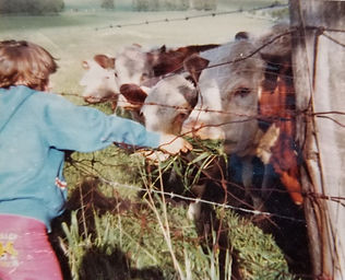 Colleen feeding cows.jpg