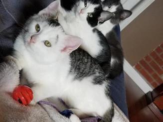 Toby, Tori & Trish