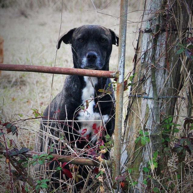 A stoic dog