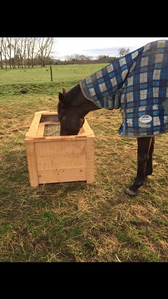 Horse feeder 4.jpg