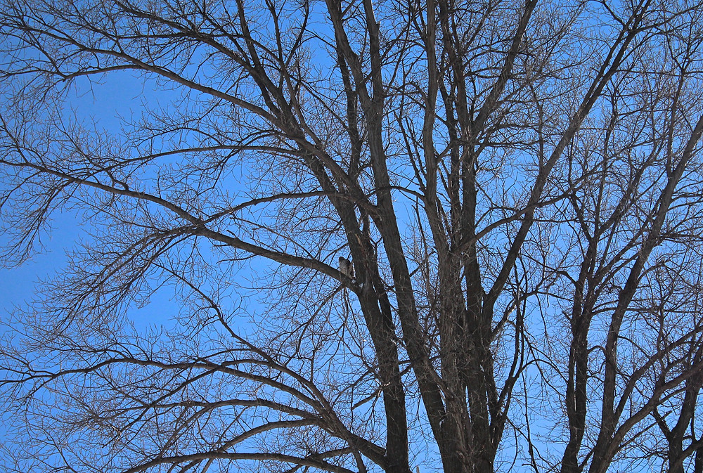 Blue Sky Daycare home daycare children spotted a big hawk in a tree